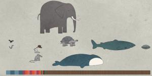 Γιατί άλλα ζώα ζουν πολλά και άλλα λίγα χρόνια